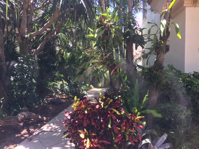 misting system near plants